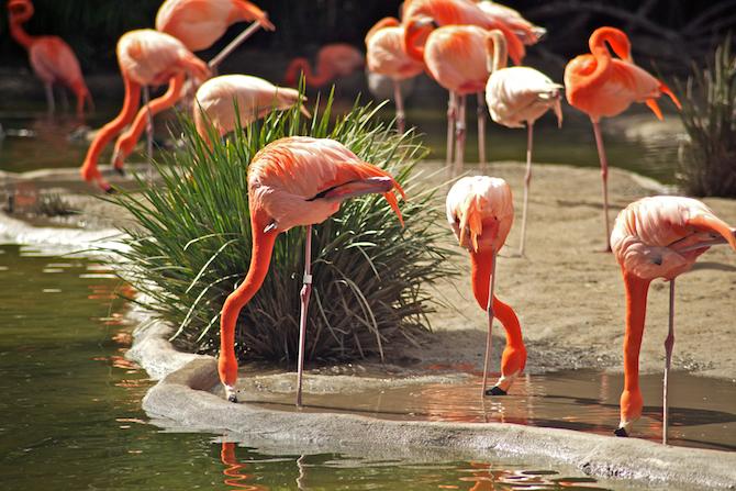 San-Diego-Zoo-CA-Naomi-VanDoren 1.jpg