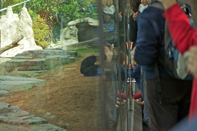 San-Diego-Zoo-CA-Naomi-VanDoren 5.jpg