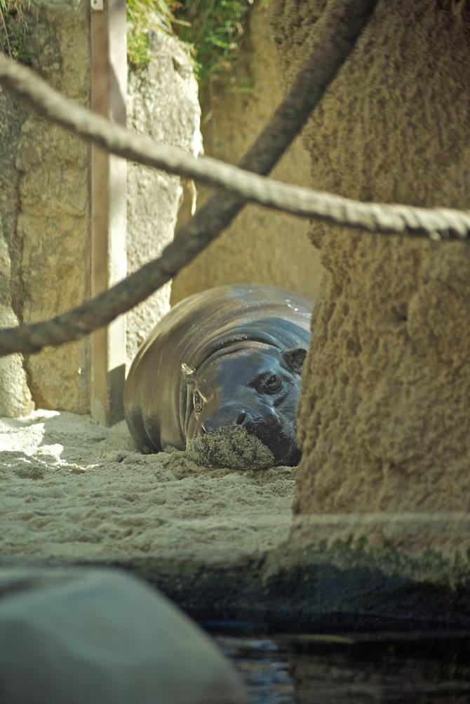 San-Diego-Zoo-CA-Naomi-VanDoren 9.jpg