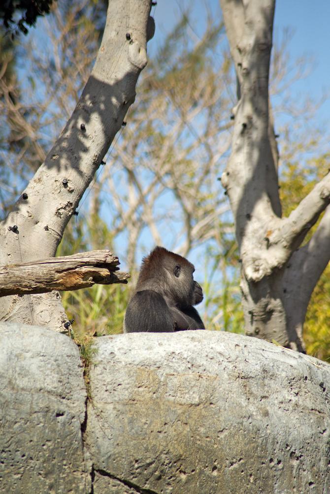San-Diego-Zoo-CA-Naomi-VanDoren 10.jpg