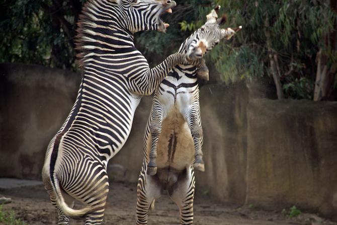 San-Diego-Zoo-CA-Naomi-VanDoren 43.jpg