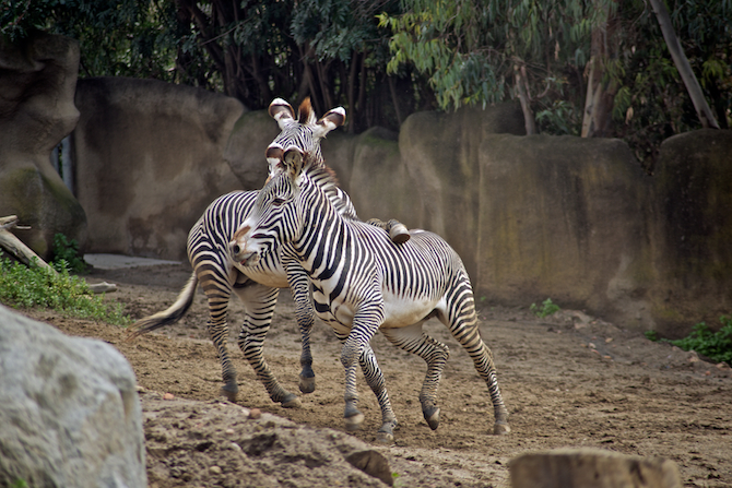 San-Diego-Zoo-CA-Naomi-VanDoren 44.jpg