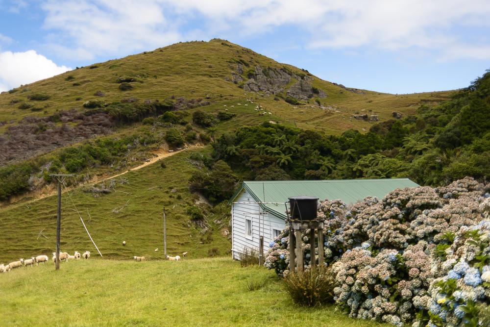 New Zealand Travel D2 Naomi VanDoren-4.jpg