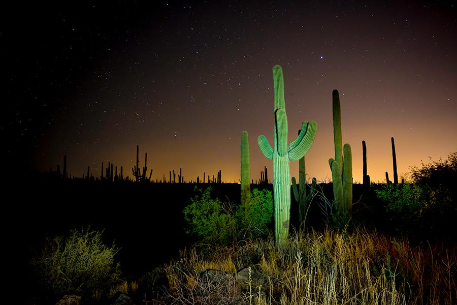 saguaro-desert-photos