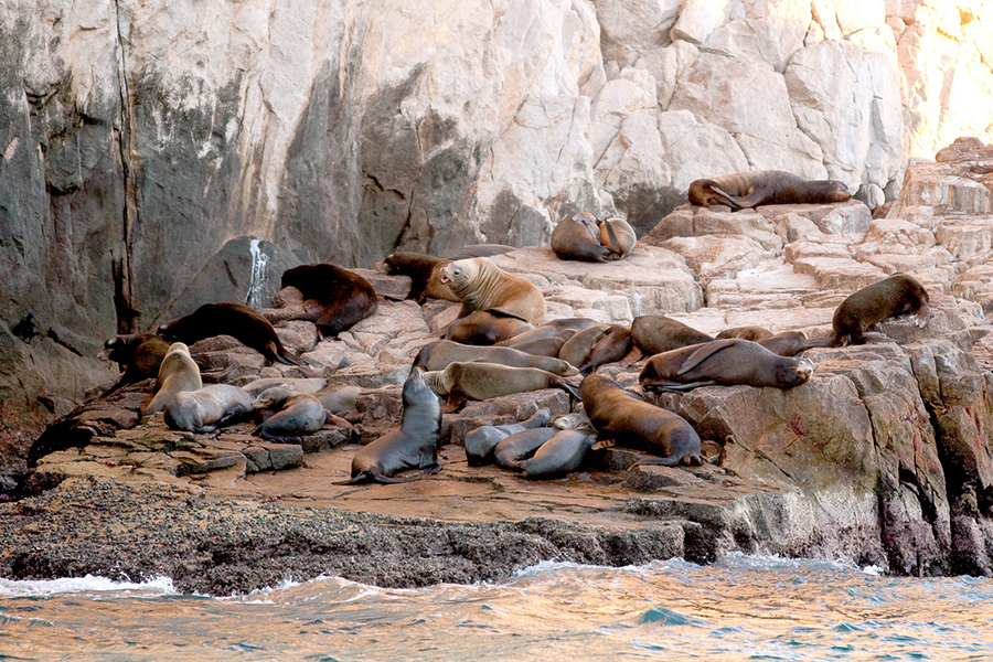 california-resort-photographer