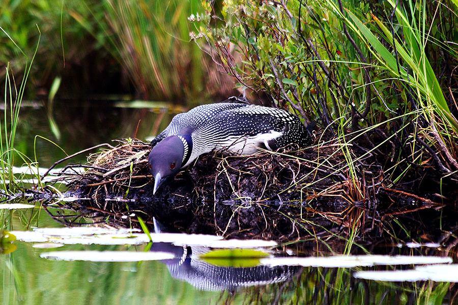 wisconsin-wildlife-photographer