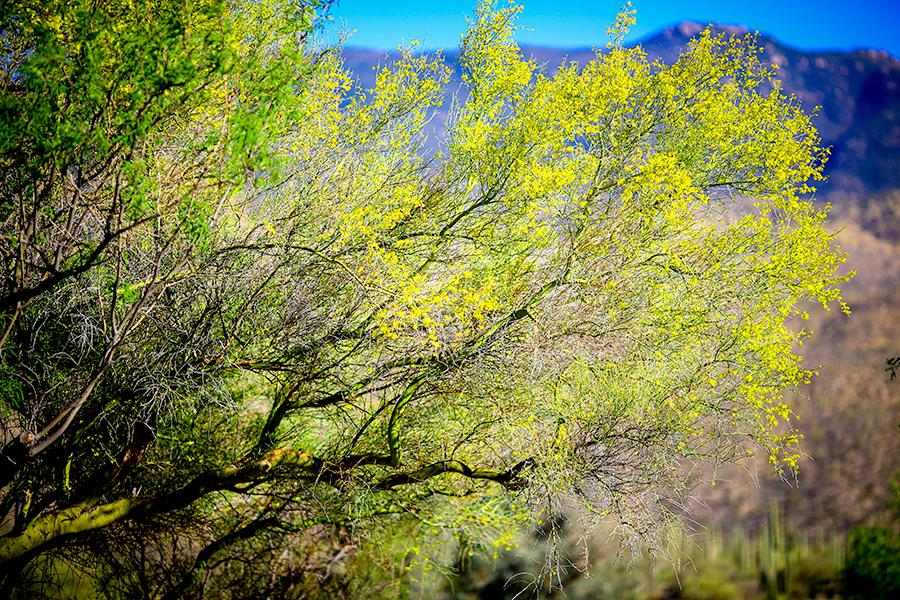 albuquerque-ranch-photographer