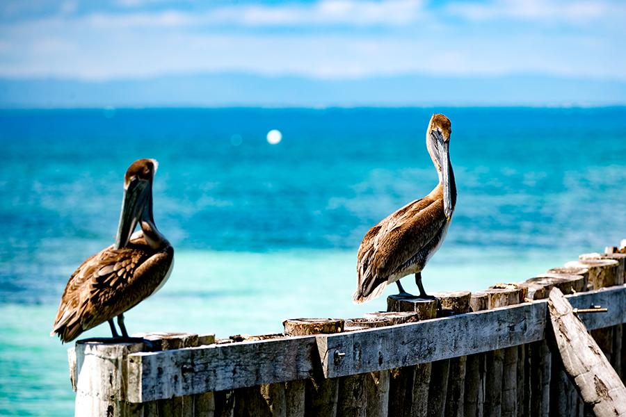 punta-gorda-resort-photography