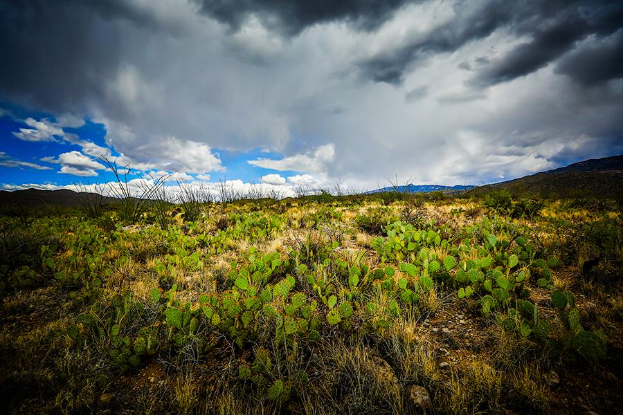 best-washington-luxury-ranch-photographer