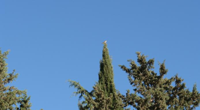 cyprus_bird.PNG
