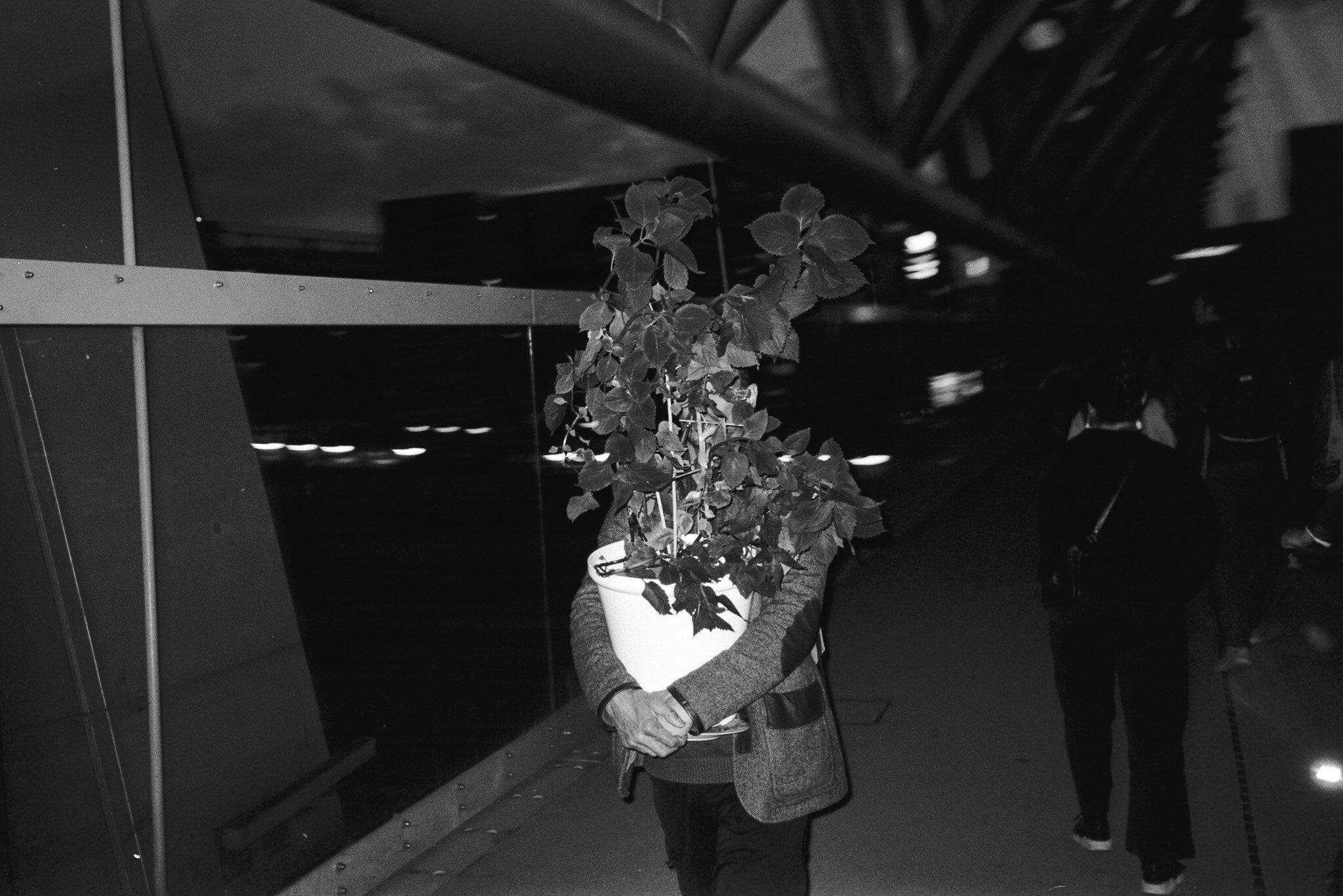 man with plant, Akrobaten