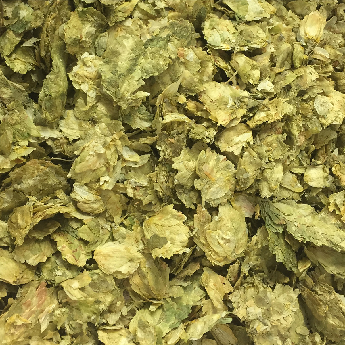 Hops have arrived!