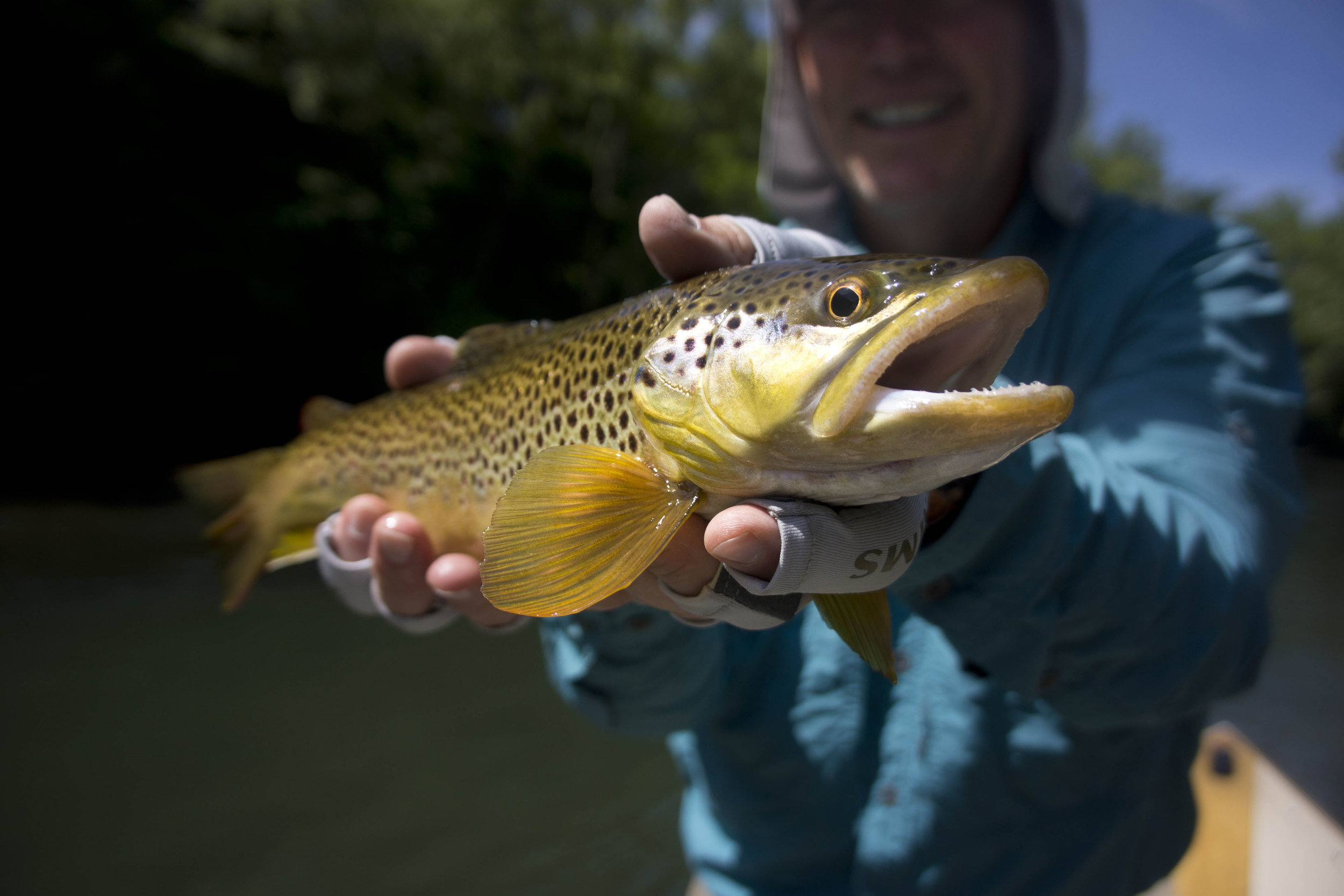 Trout Fishing in Western NC | Asheville Fly Fishing Company