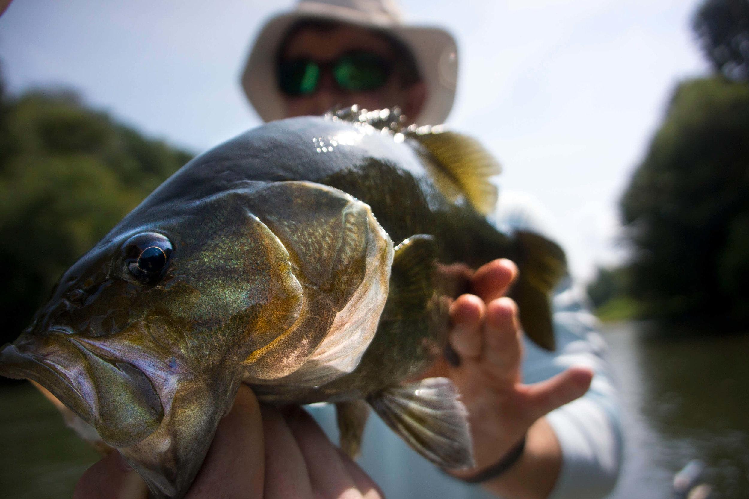 Asheville Fly Fishing Company - 1_1 12.22.19 AM.JPG