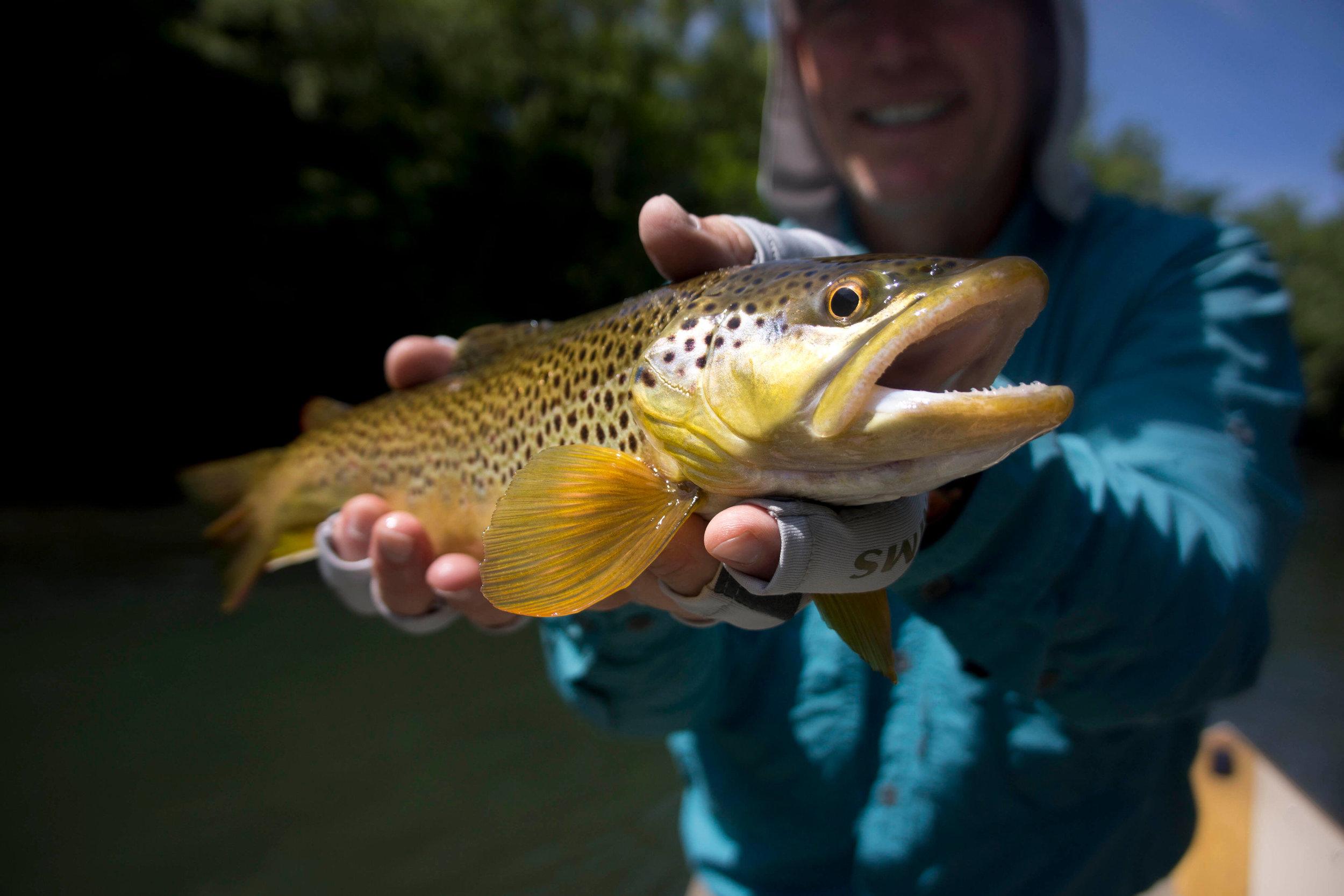 South Holston River Fishing | Fly Fishing TN Mountains
