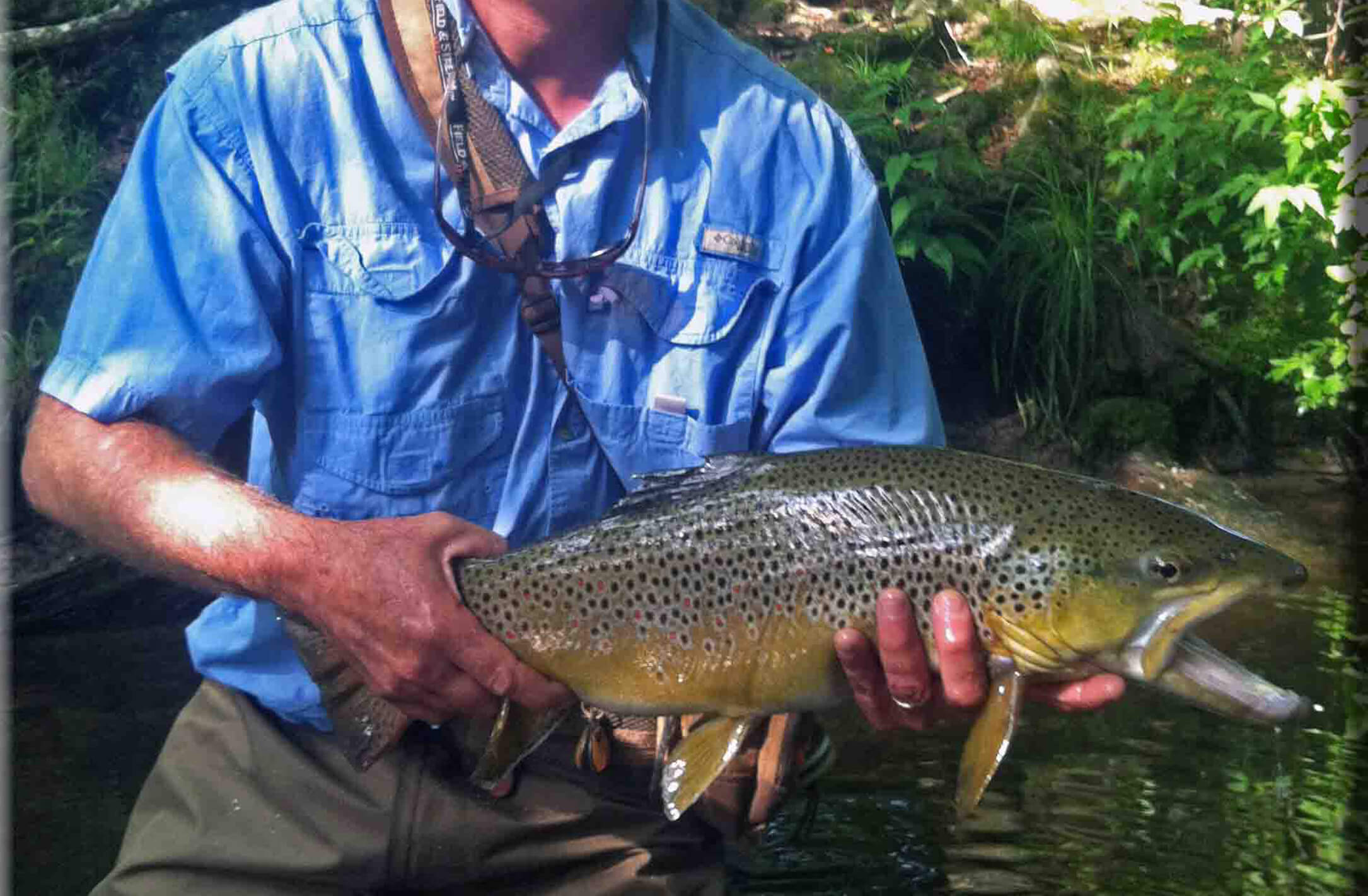 Davidson River - Asheville Fly Fishing Co.small.jpg