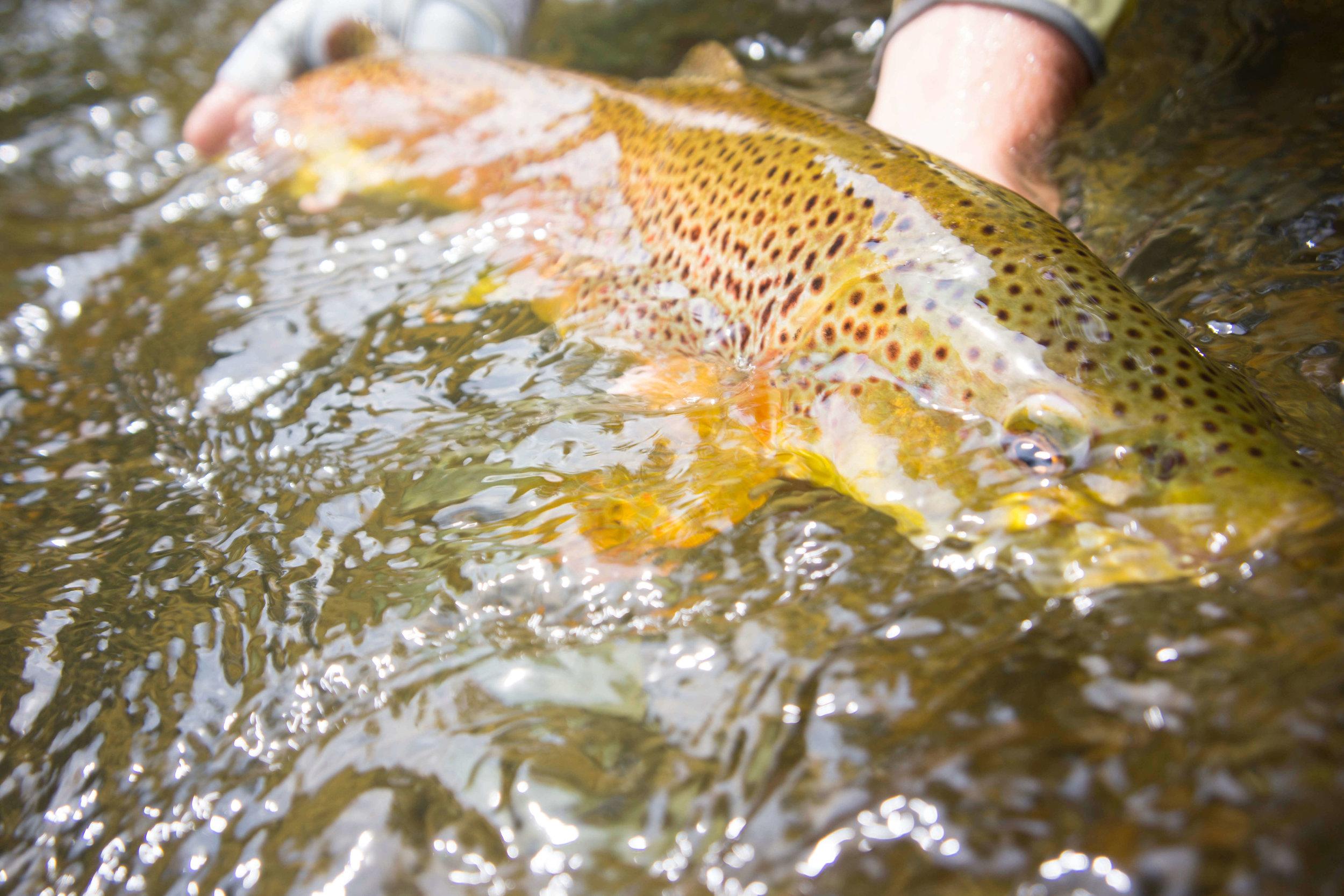 Asheville Fly Fishing Company _20.JPG