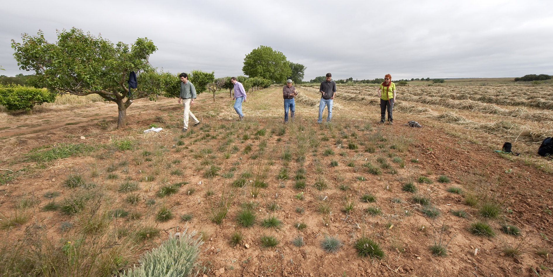 Red Fescue project in Spain