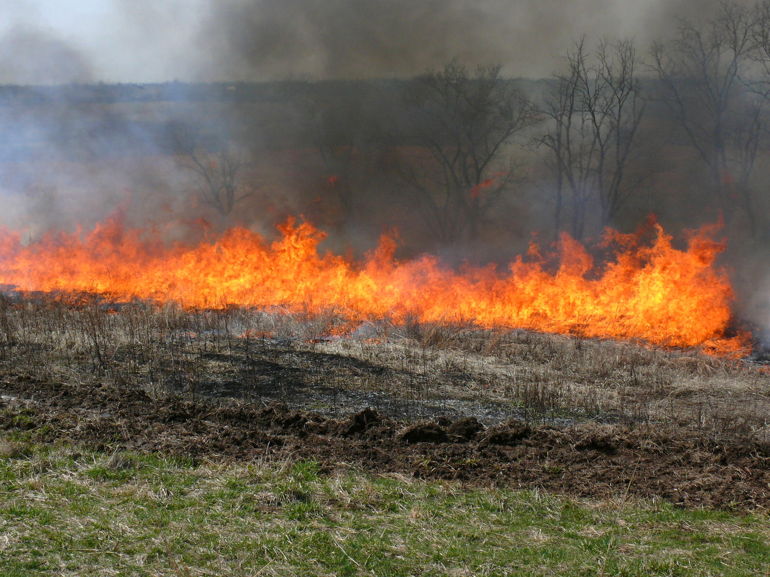 Controlled burn, a key component of native warm season grass restorations, at Shaker Village in Harrodsburg, KY.