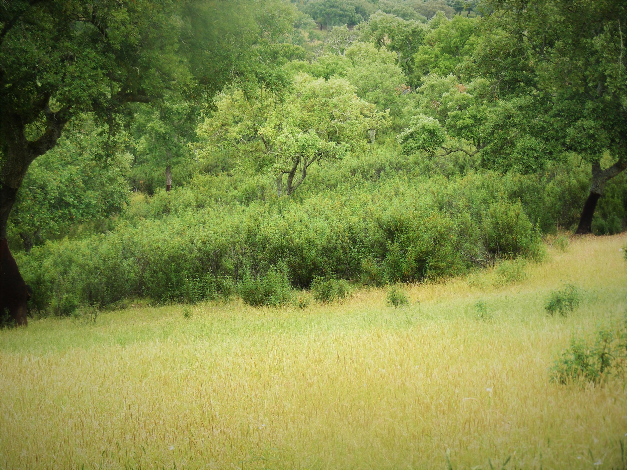 Woody Plant Dominance in Grasslands Alters Ecosystem Dynamics