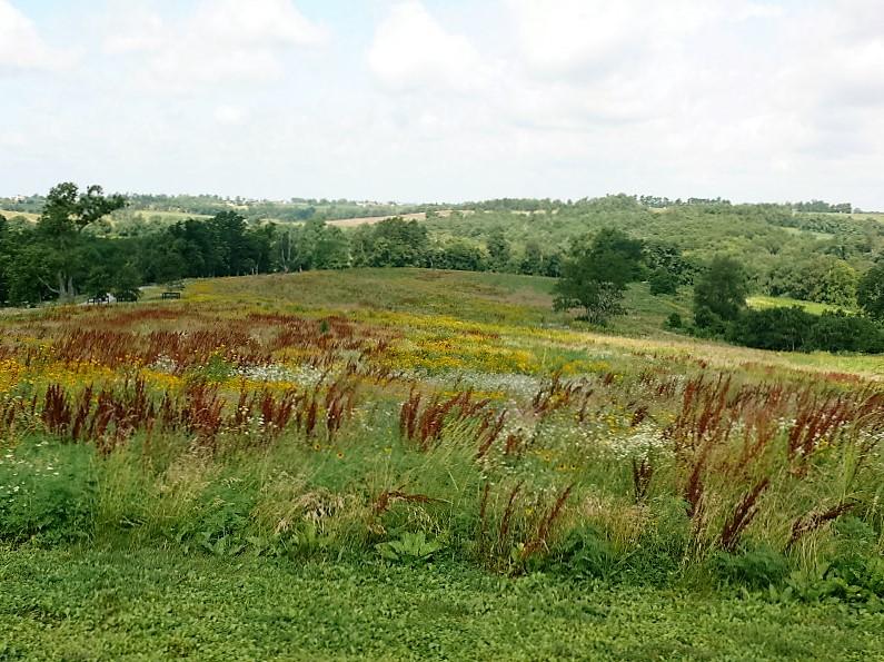Native Warm Season Grassland Restoration in Kentucky