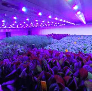 IGS builds first vertical farm in the UK