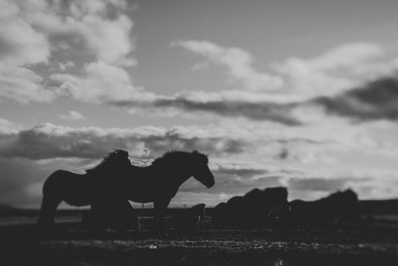 islandia--031.jpg