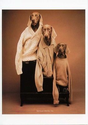 william wegman 2.JPG