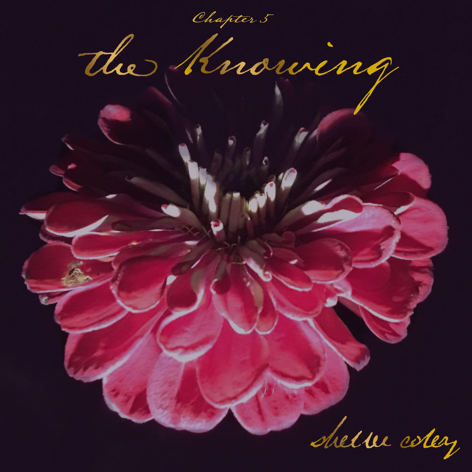 Stream  The Knowing  on Spotify