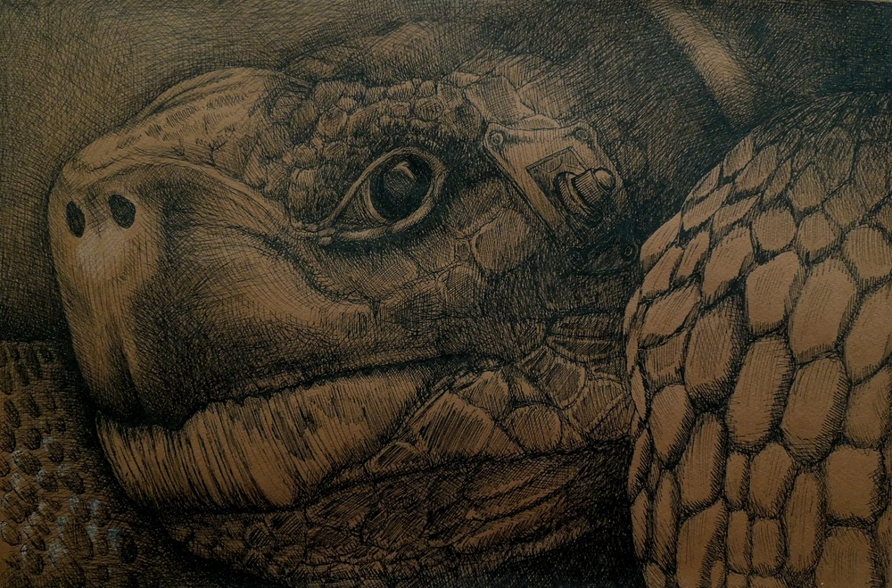 """Full Disclosure  18""""x24"""", Ink on toned paper, 2015"""