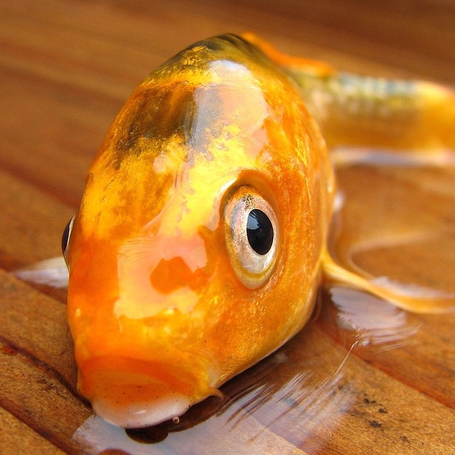 Considering building a custom home, garage, or addition? Don't feel like a fish out of water. Let Half Moon help you!