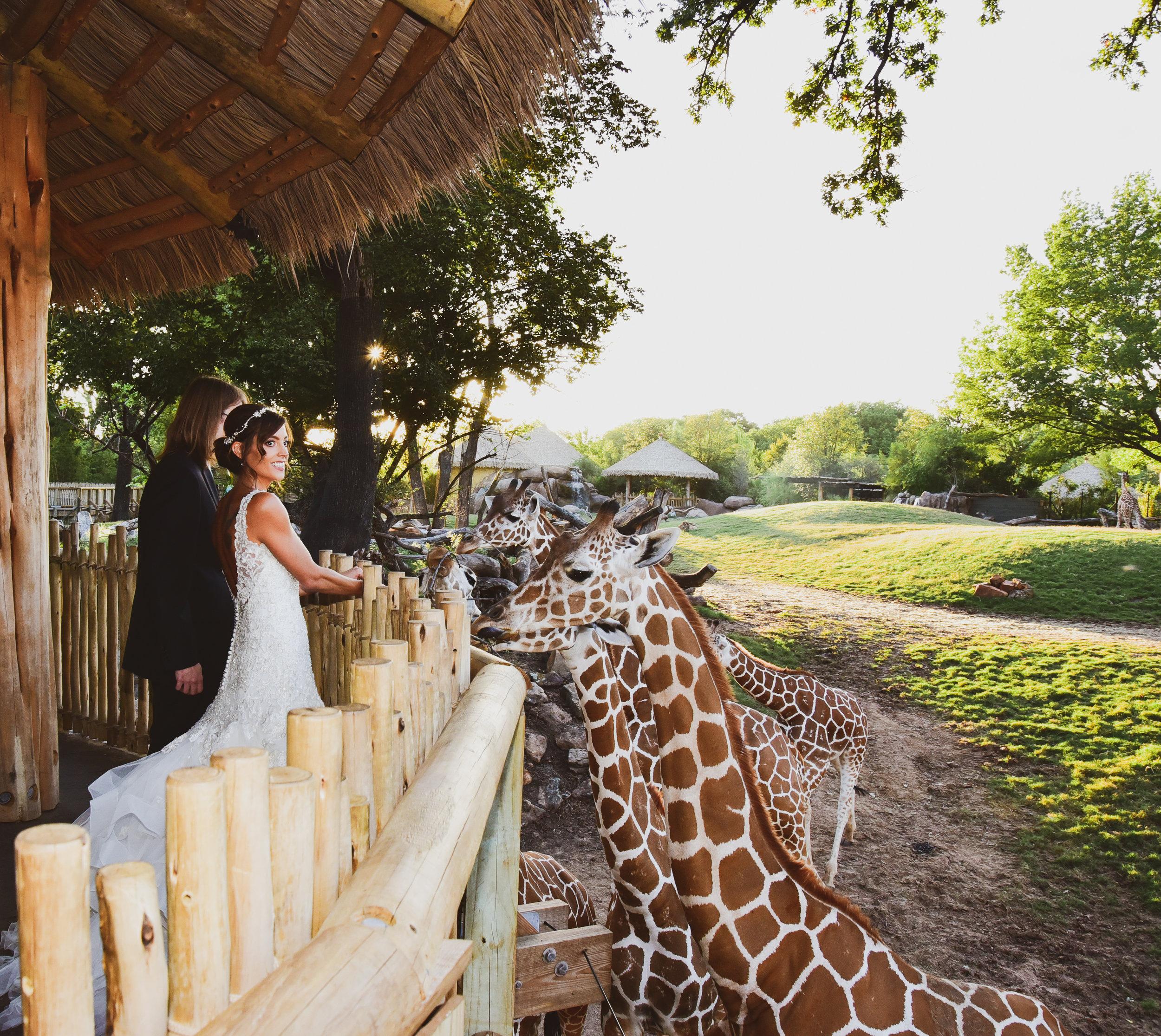 ENGAGEMENTS + WEDDINGS -