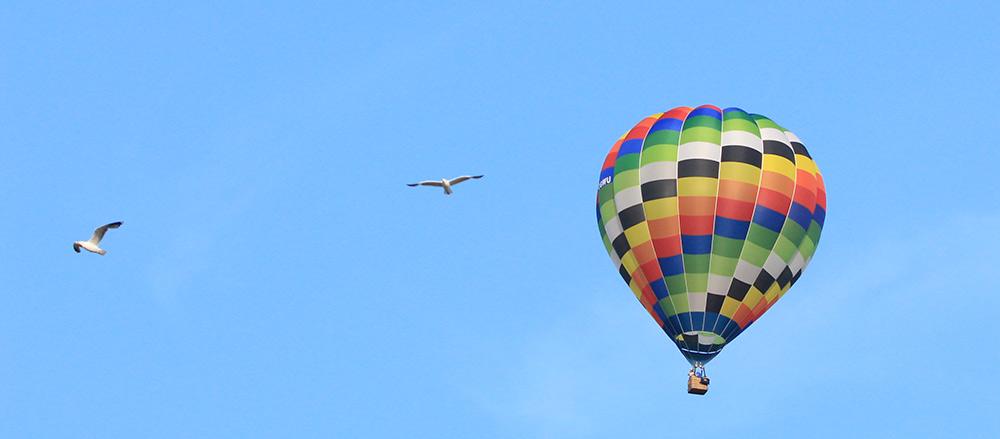balloongull.jpg