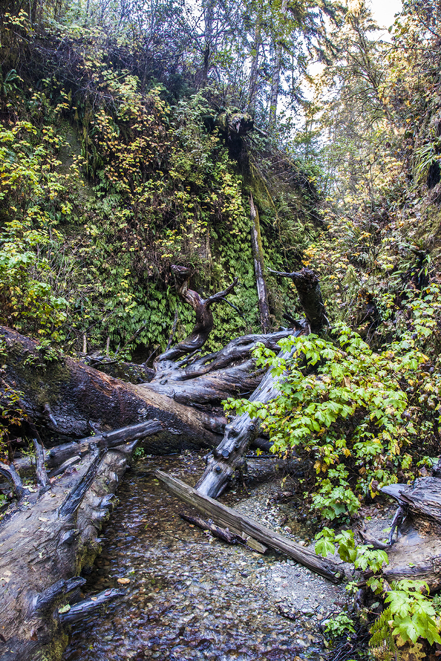 Fern Canyon