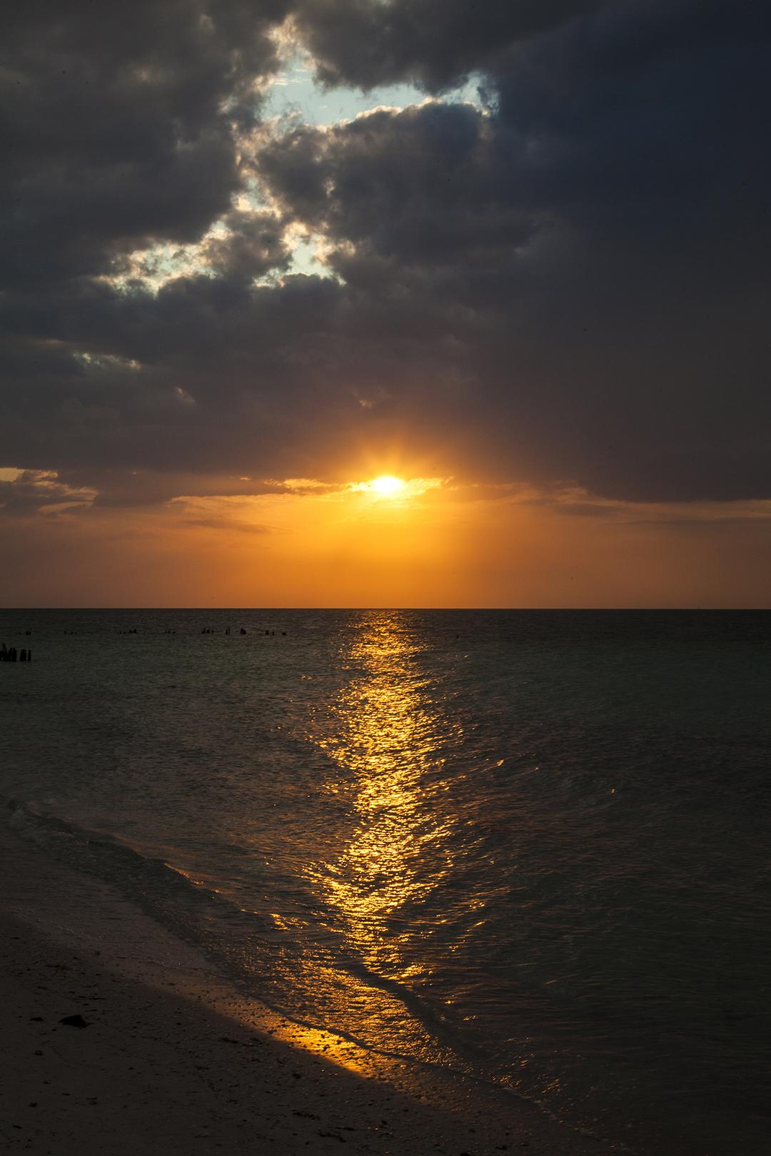 golden ray.jpg