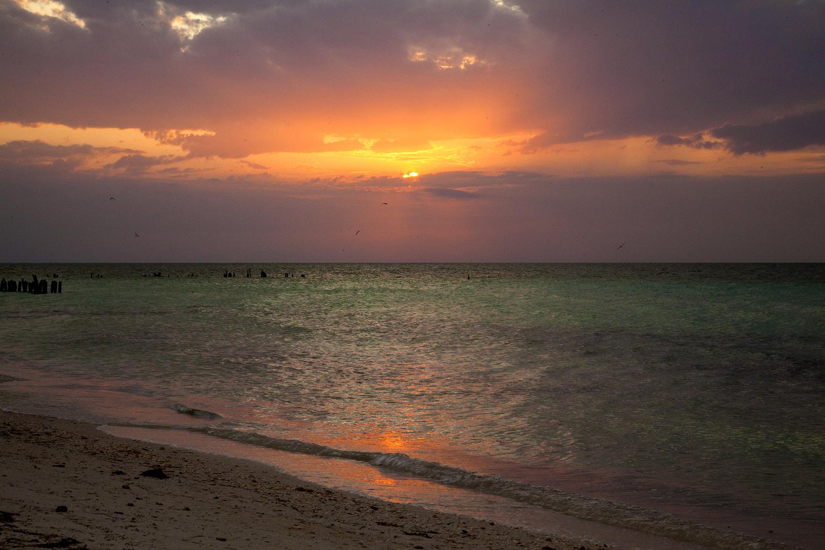 sunset w green.jpg