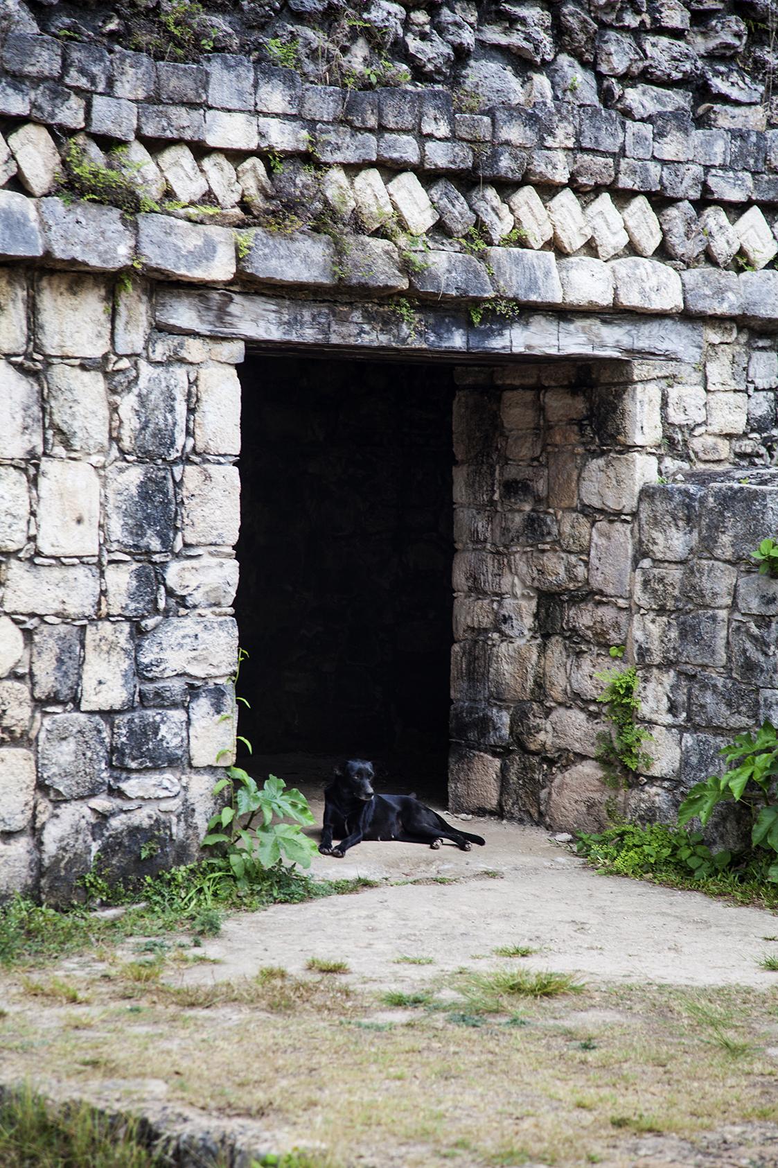 ruin dog 2.jpg
