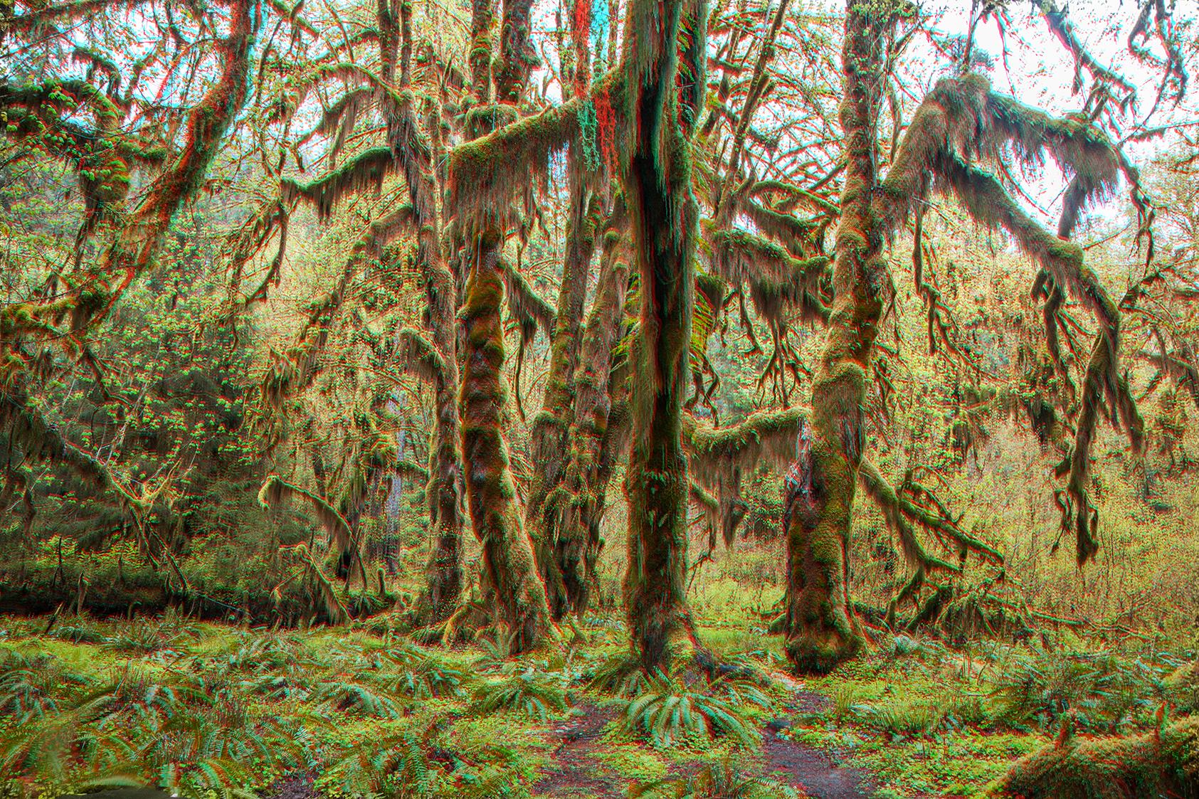 3d trees 2 web.jpg