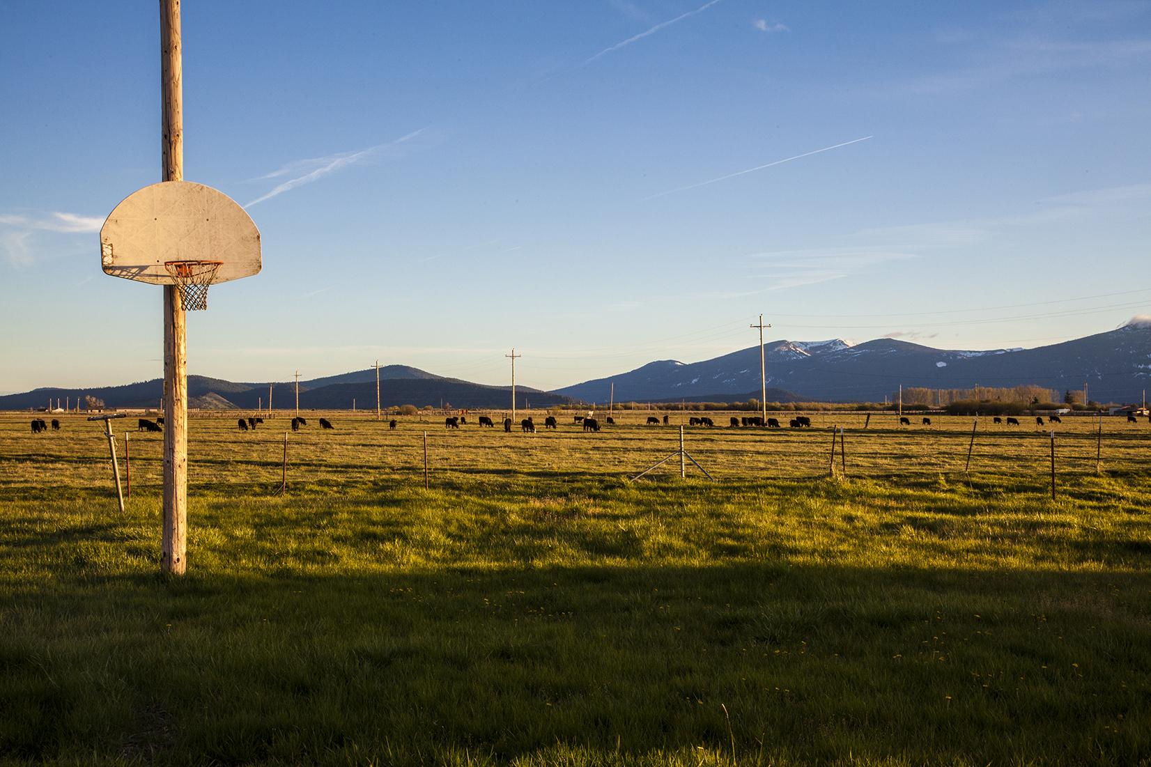 basket ball hoop web.jpg