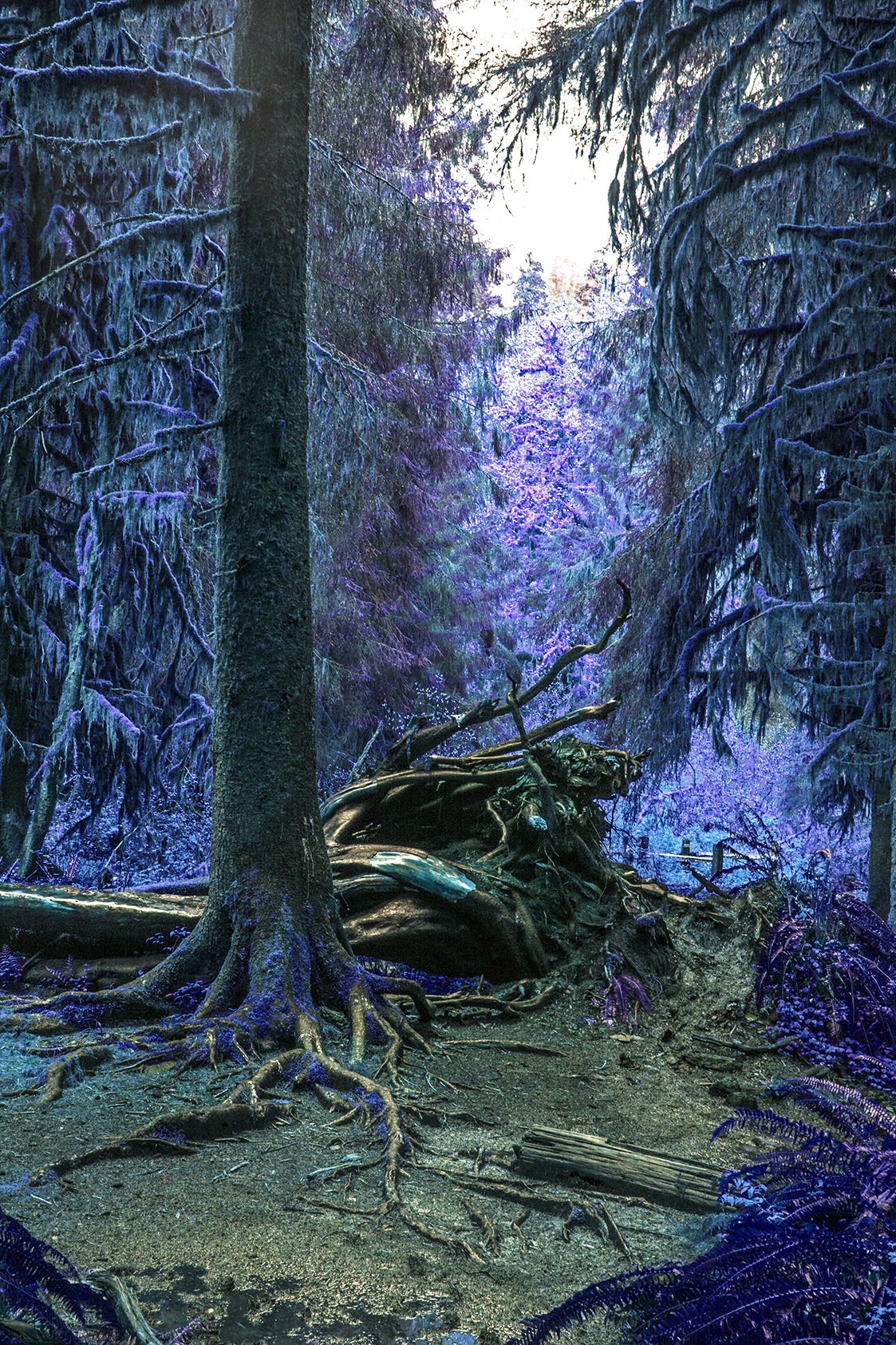 blue tree web.jpg