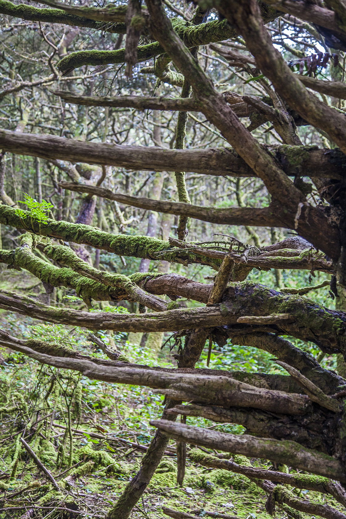 hobbit trees web.jpg