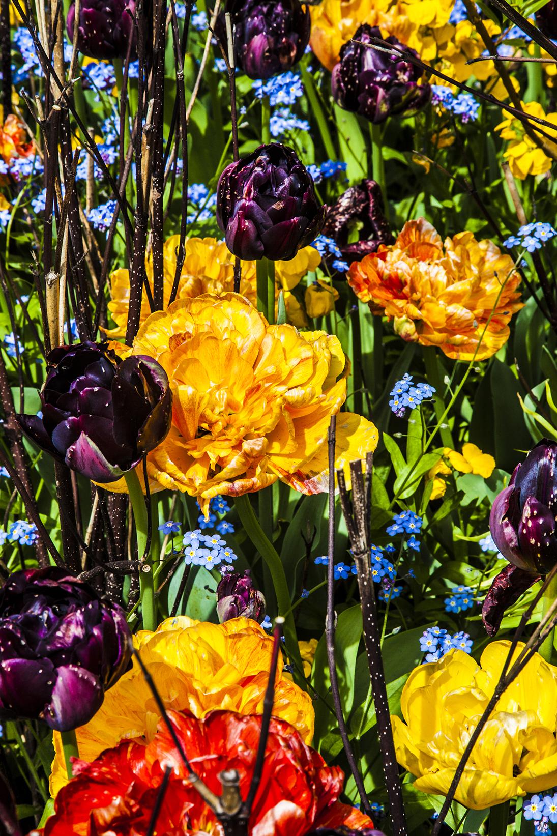 more flowers web.jpg