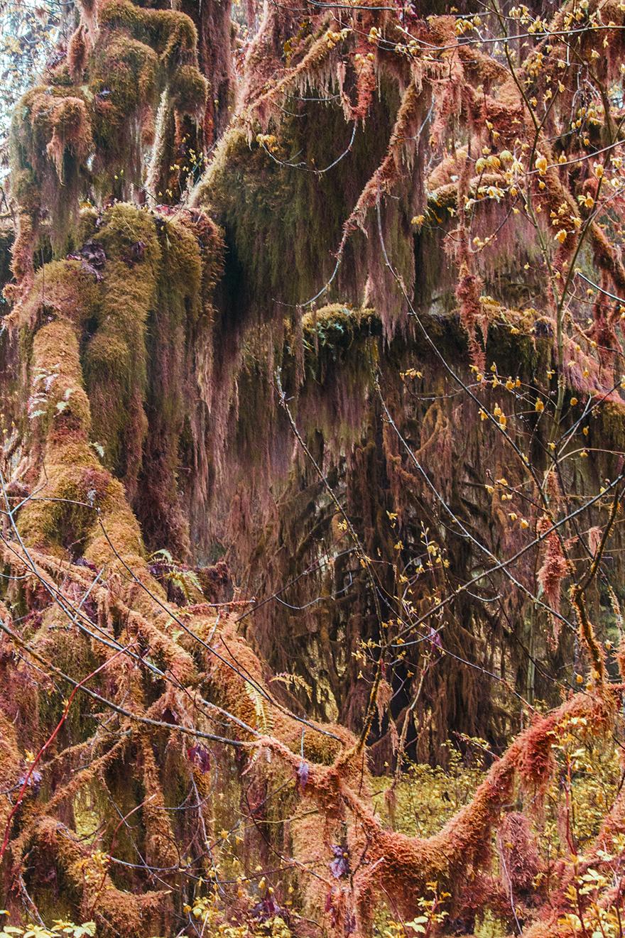 moss hole web.jpg