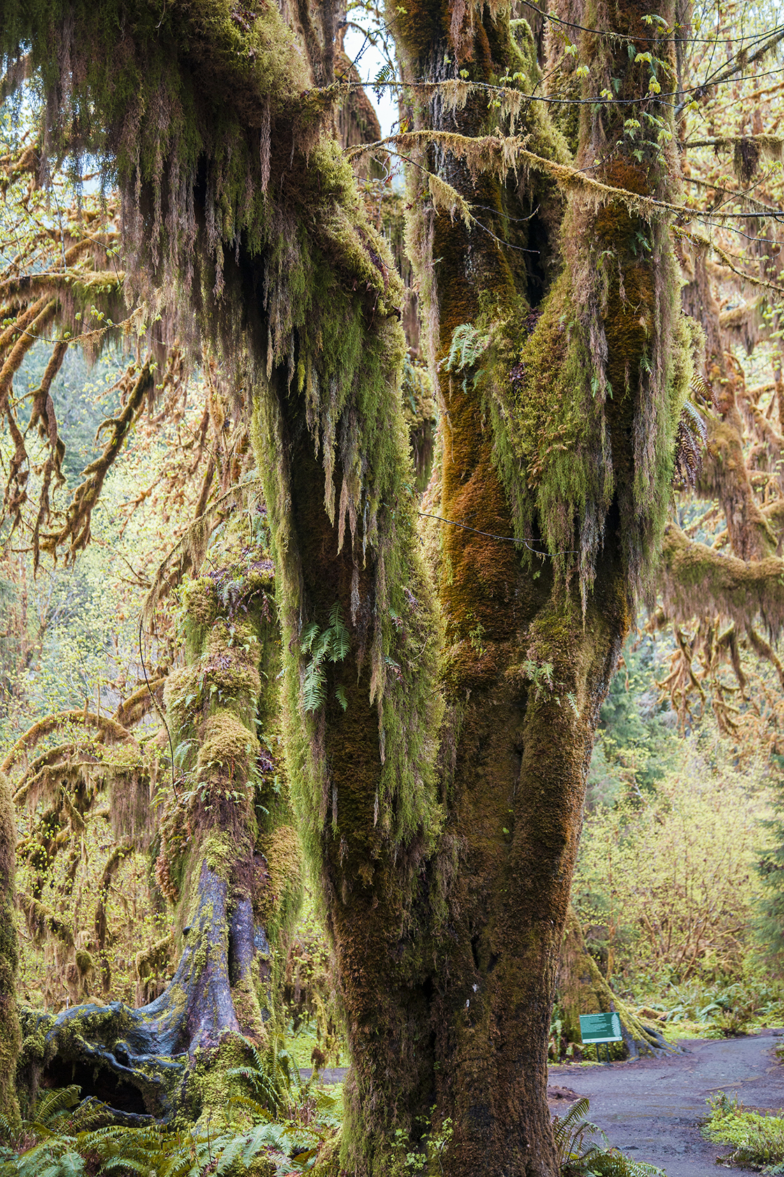 moss tree 2 web.jpg