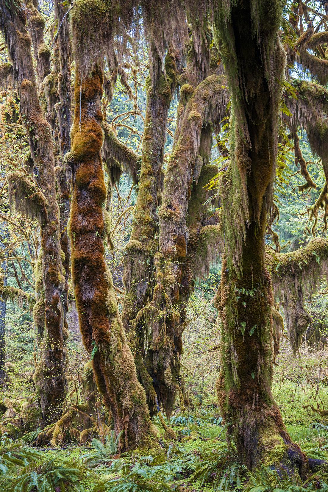 moss trees web.jpg