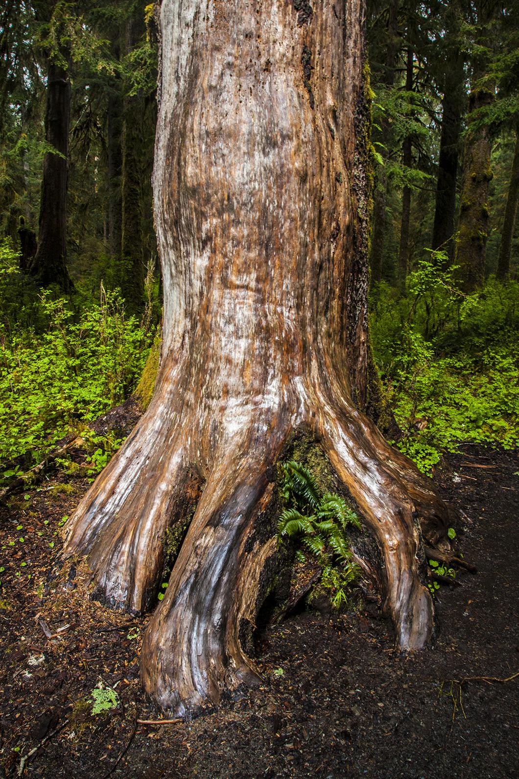 tree in ground web.jpg