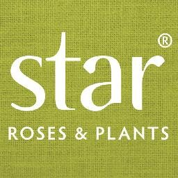 Star Roses.jpg