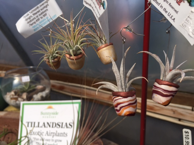 airplant earrings.jpg