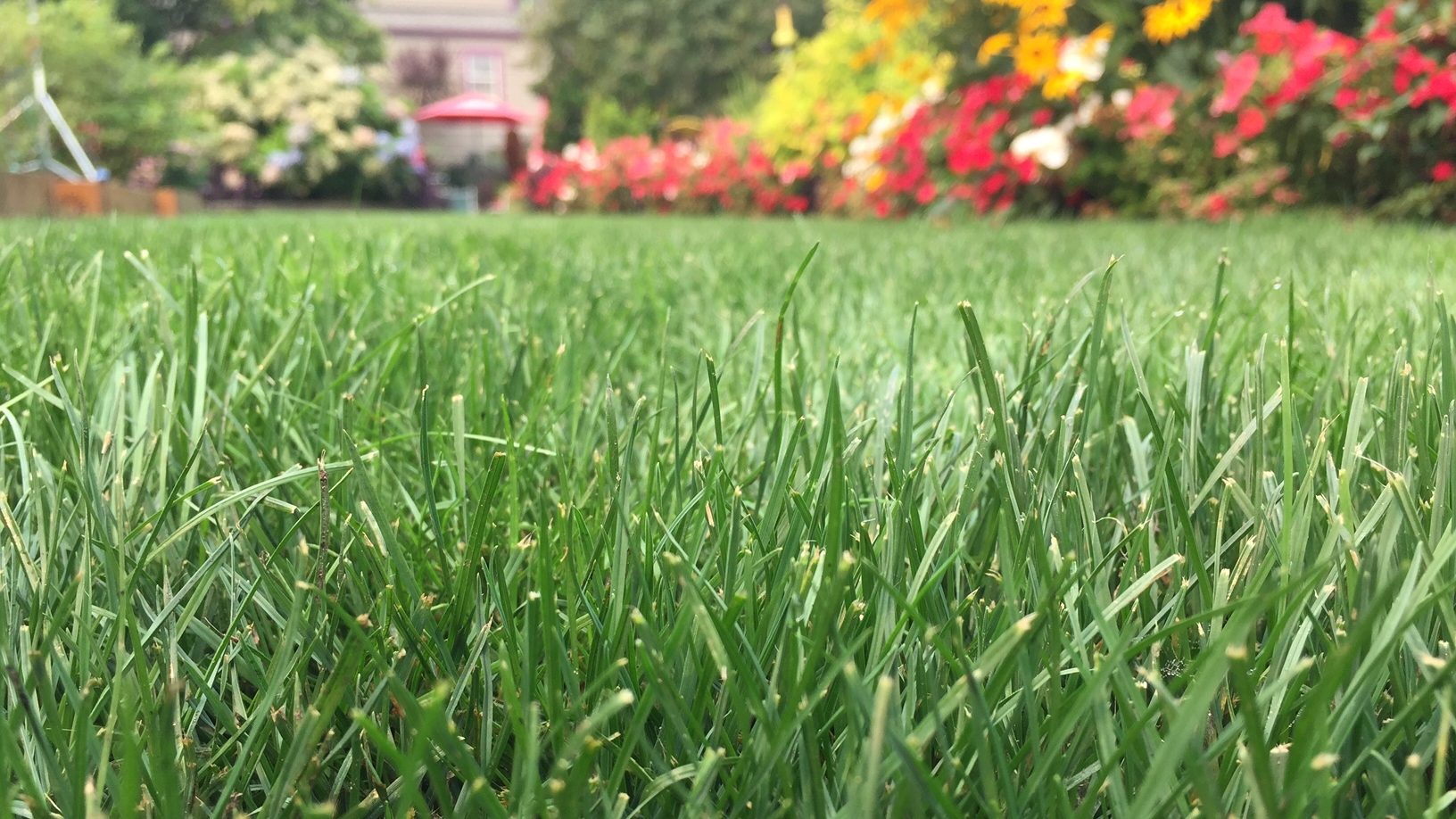 steve's lawn.jpg