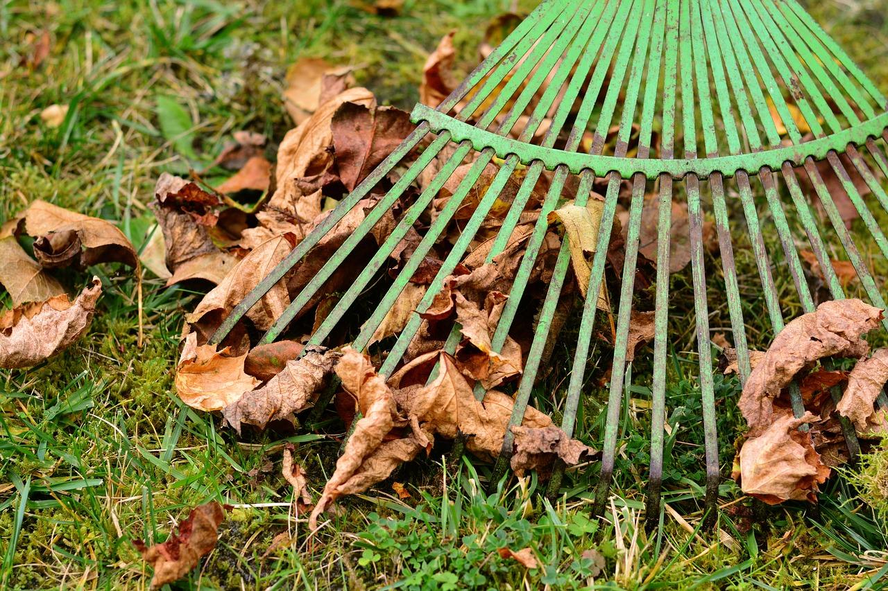 raking leaves.jpg